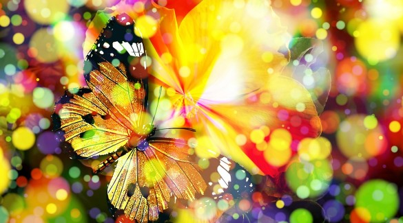 butterfly-407746_1280