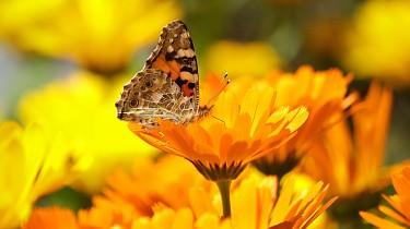 butterfly-196745_1920